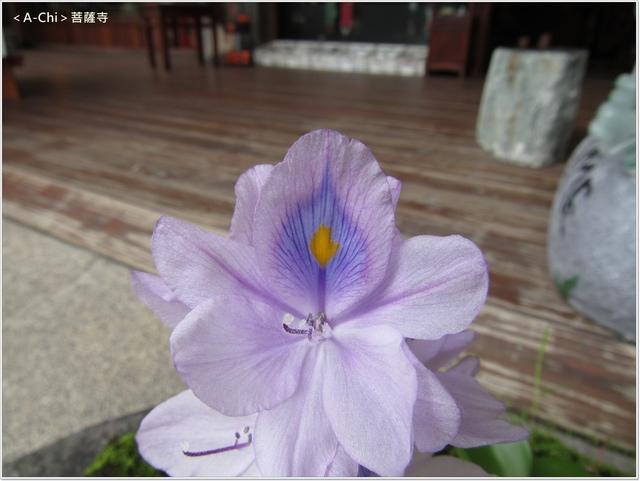 菩26.JPG - 【台中。大里】菩薩寺