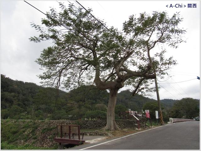 街21.JPG - 【新竹。關西】街上健走輕旅行