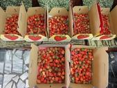 傑帝家草莓季開催!!:傑帝家草莓季開催001.jpg