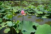 2011.台北植物園(上)初夏荷影:DSC07000