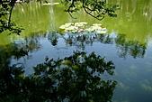 2011.台北植物園(下)初夏蓮想:DSC07119
