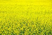 新疆十六觀-_通往淨土與穢土的邊際:花想3