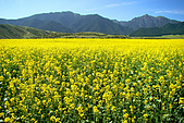 新疆十六觀-_通往淨土與穢土的邊際:花想1