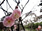 2012.2. 中正紀念堂宮粉梅..粉墨豋場:DSC07526.jpg