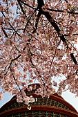 2011.3.13淡水天元宮日本吉野櫻花季&花祭: