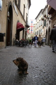 雨中Orvieto奧維特---義大利朝行:DSC02342-2.jpg