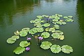 2011.台北植物園(下)初夏蓮想:DSC06908