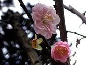 2012.2. 中正紀念堂宮粉梅..粉墨豋場:DSC07536.jpg