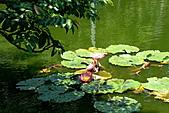 2011.台北植物園(下)初夏蓮想:DSC06928-2.jpg