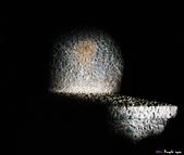 印度聖境 內在聖域 :納西克般圖里納石窟