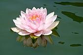 2011.台北植物園(下)初夏蓮想:DSC06973.jpg