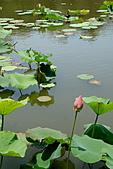 2011.台北植物園(上)初夏荷影:DSC07109