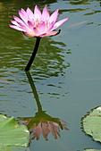2011.台北植物園(下)初夏蓮想:DSC06953