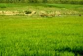 新疆十六觀-_通往淨土與穢土的邊際:牧場風光