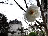 2012.2. 中正紀念堂宮粉梅..粉墨豋場:DSC07474.jpg