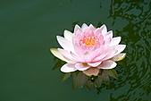 2011.台北植物園(下)初夏蓮想:DSC06971