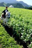 新疆十六觀-_通往淨土與穢土的邊際:騎馬少年