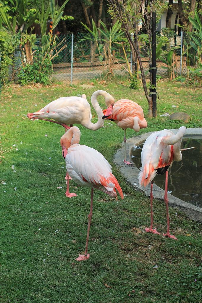 新竹市立動物園:251869711_x.jpg