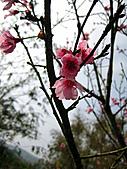 2011西湖柚花季:IMG_7054.JPG