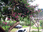 南庄桂花園:IMG_4860.JPG