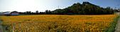 2014西湖甘藷農業之旅與白柚品嘗活動:IMG20141121111654.jpg