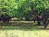 2011西湖柚花季:IMG_7032.JPG