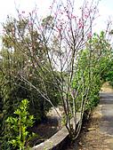2011西湖柚花季:IMG_7055.JPG