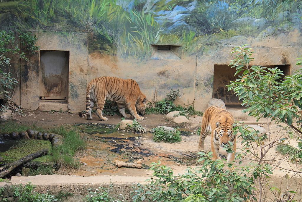 新竹市立動物園:251870427_x.jpg