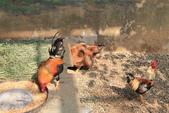 新竹市立動物園:251869124_x.jpg