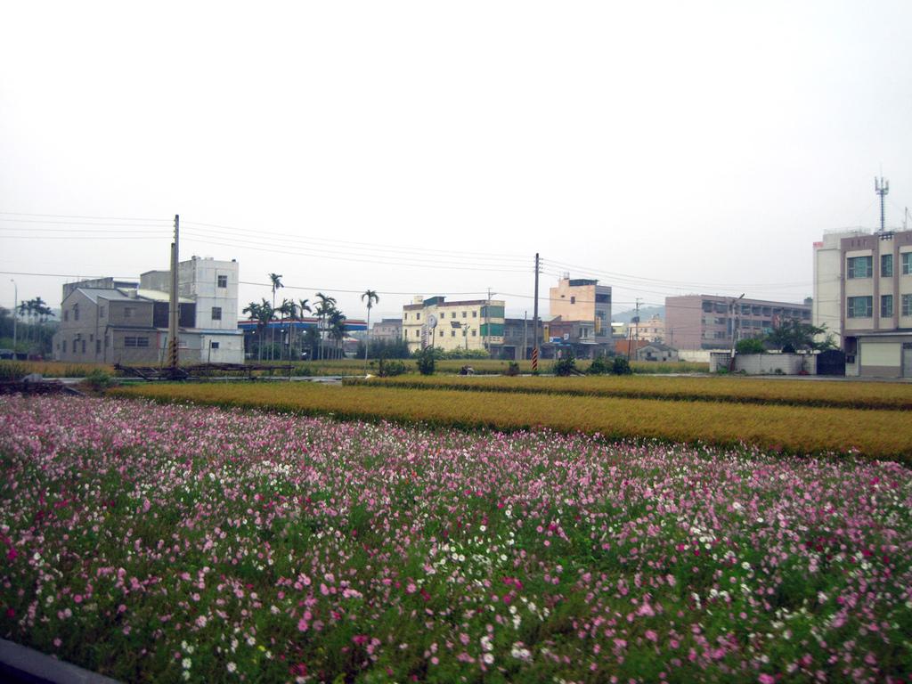 2010苗栗『遊山觀海-挑戰100』:IMG_4537.JPG