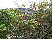 南庄桂花園:IMG_4833.JPG