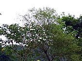 南庄桂花園:IMG_4861.JPG