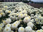 2012銅鑼杭菊與客家園區:DSC_5487.JPG