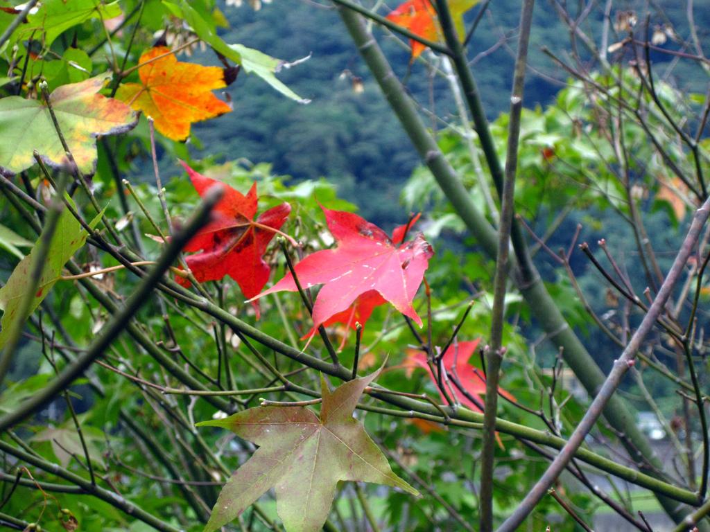 南庄桂花園:IMG_4834.JPG