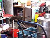 梧棲漁港與金福華餐廳:IMG_2960.JPG