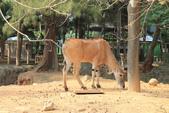 新竹市立動物園:251868225_x.jpg