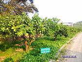2014柚子山:IMG_20140316_162909.jpg