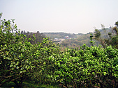 2011西湖柚花季:IMG_7088.JPG