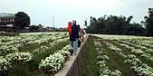 2012銅鑼杭菊與客家園區:DSC_5450_c.jpg