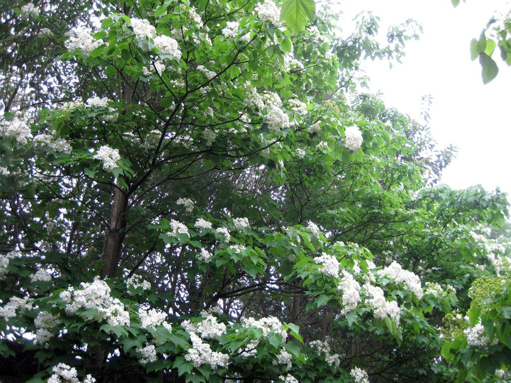 2010桐花季在苗栗香格里拉樂園:IMG_1147.jpg