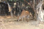 新竹市立動物園:251868263_x.jpg
