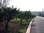 2011西湖柚花季:IMG_7012.JPG