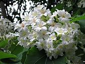 2010桐花季在苗栗香格里拉樂園:IMG_1148.jpg
