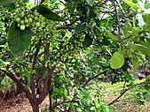 2011西湖柚花季:IMG_7013.JPG