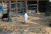 新竹市立動物園:251868371_x.jpg