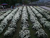 2012銅鑼杭菊與客家園區:DSC_5489.JPG
