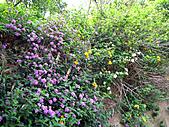 2011西湖柚花季:IMG_7098.JPG