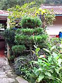 南庄桂花園:IMG_4825.JPG