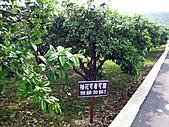 2011西湖柚花季:IMG_7015.JPG
