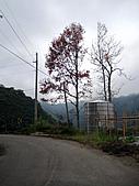 2010苗栗單車快樂遊(三) 大湖→雪見遊憩區:IMG_4328.JPG